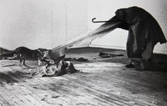 Coyote: I like America and america likes me  Joseph beuys Late 20th century German  Joseph lived together with a live coyote, photographed and filmed it. It was a performance.