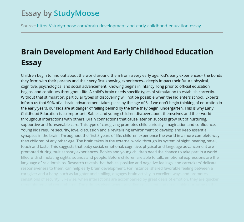 Brain Development And Early Childhood Education