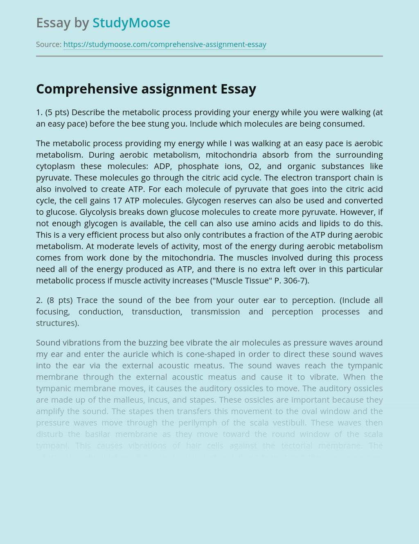Comprehensive assignment