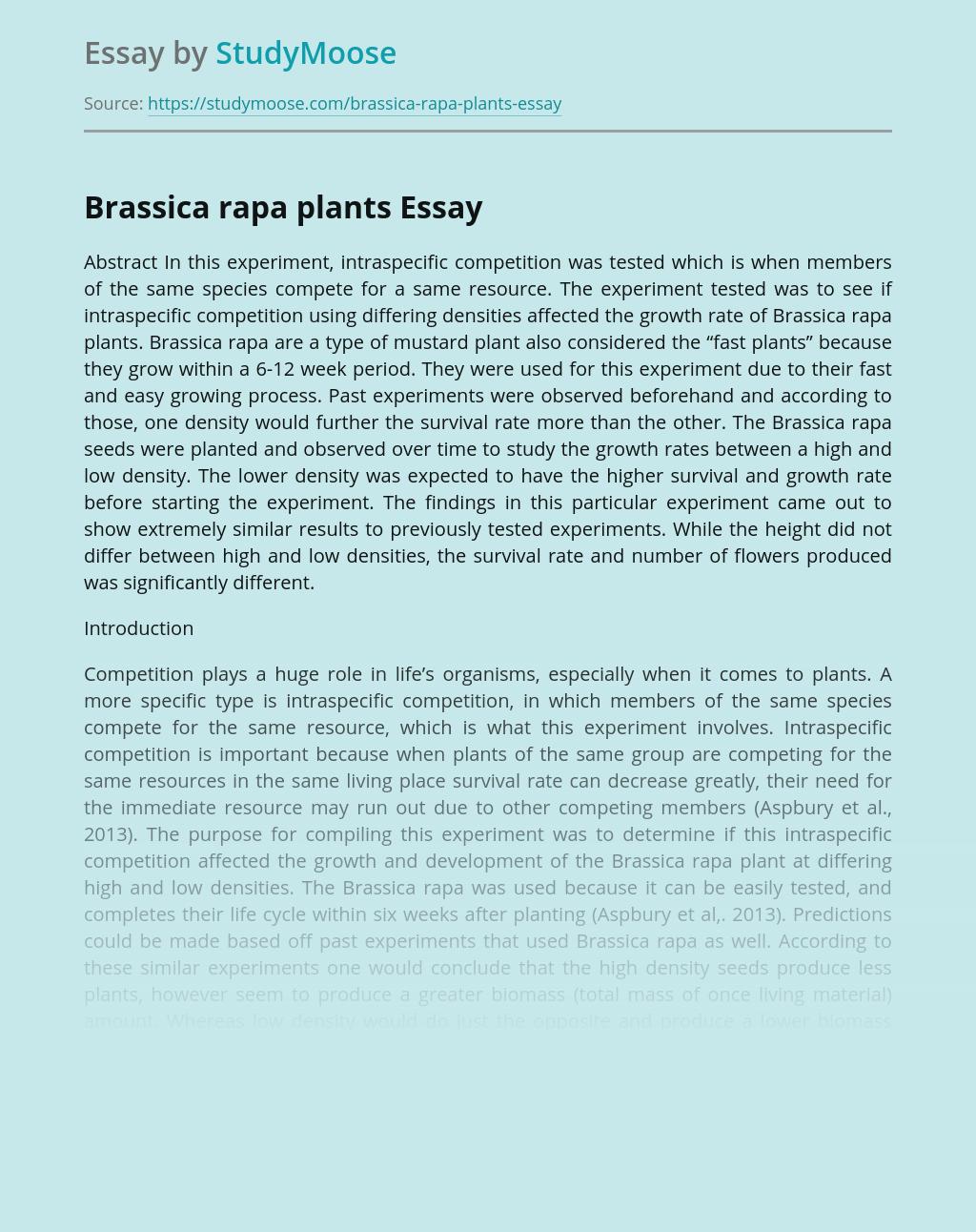 Brassica rapa plants