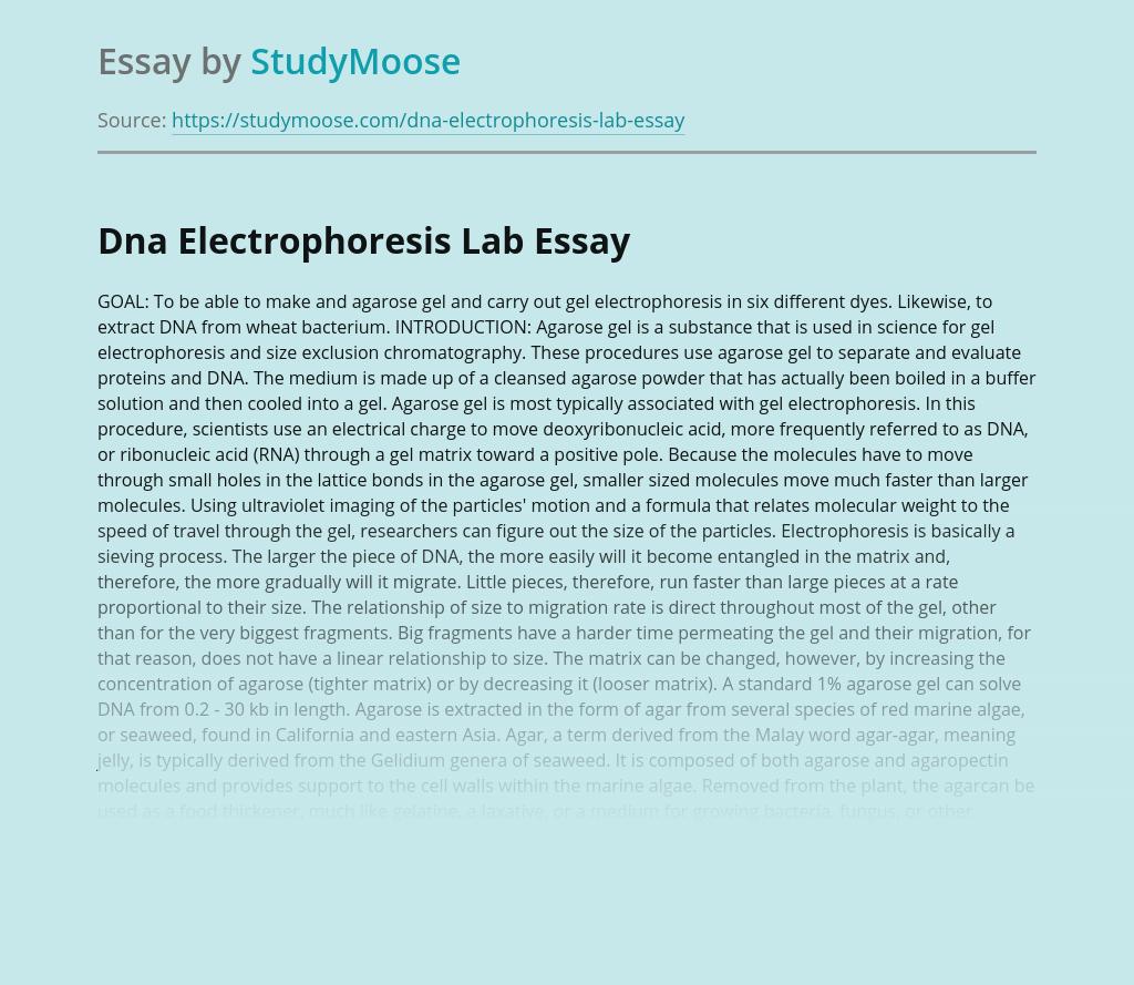 Dna Electrophoresis Lab