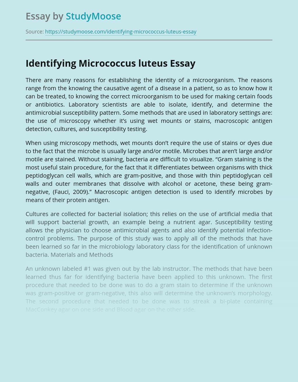 Identifying Micrococcus luteus