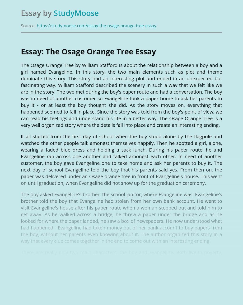 Essay: The Osage Orange Tree