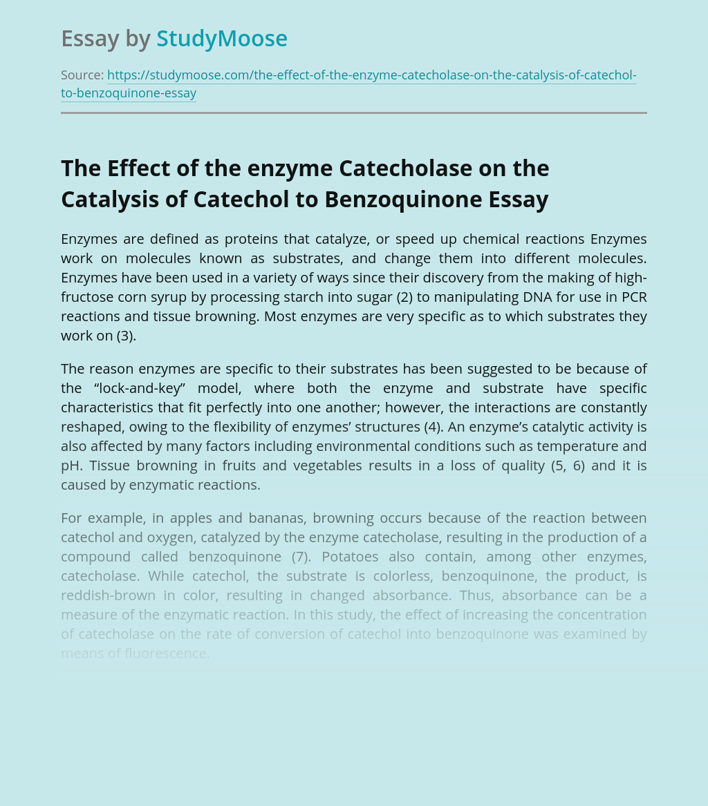 The Effect of the enzyme Catecholase on the Catalysis of Catechol to Benzoquinone