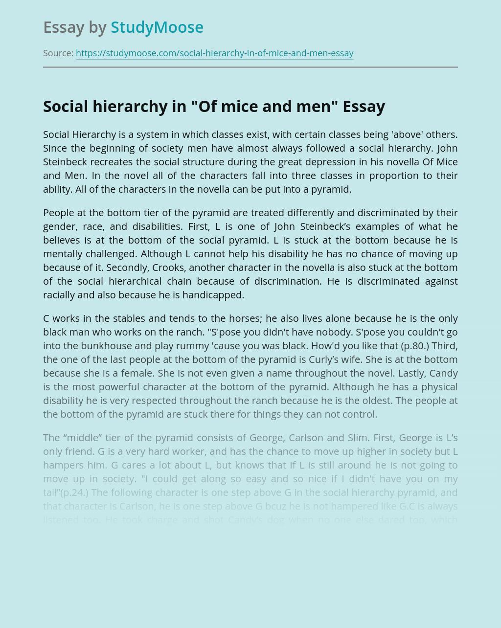 Social hierarchy in