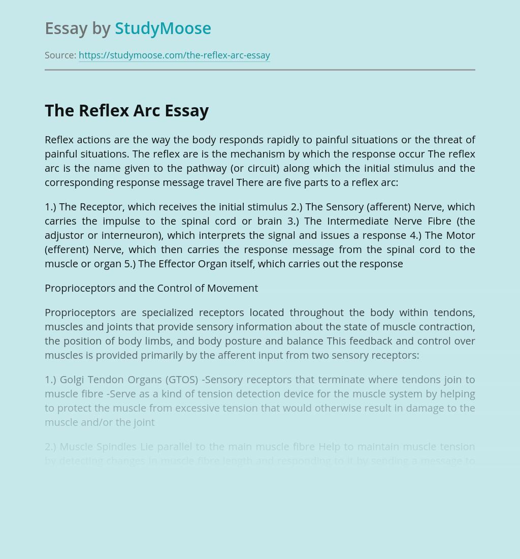 ?The Reflex Arc