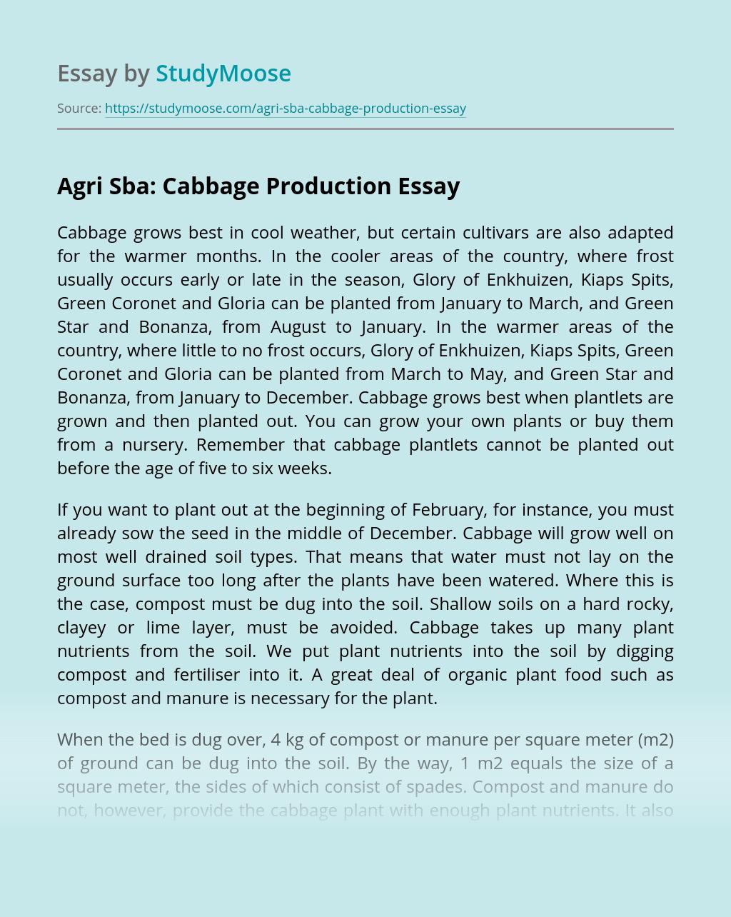 Agri Sba: Cabbage Production