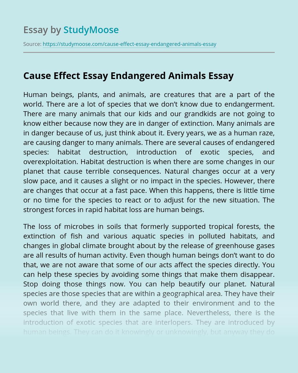 Cause Effect Essay Endangered Animals