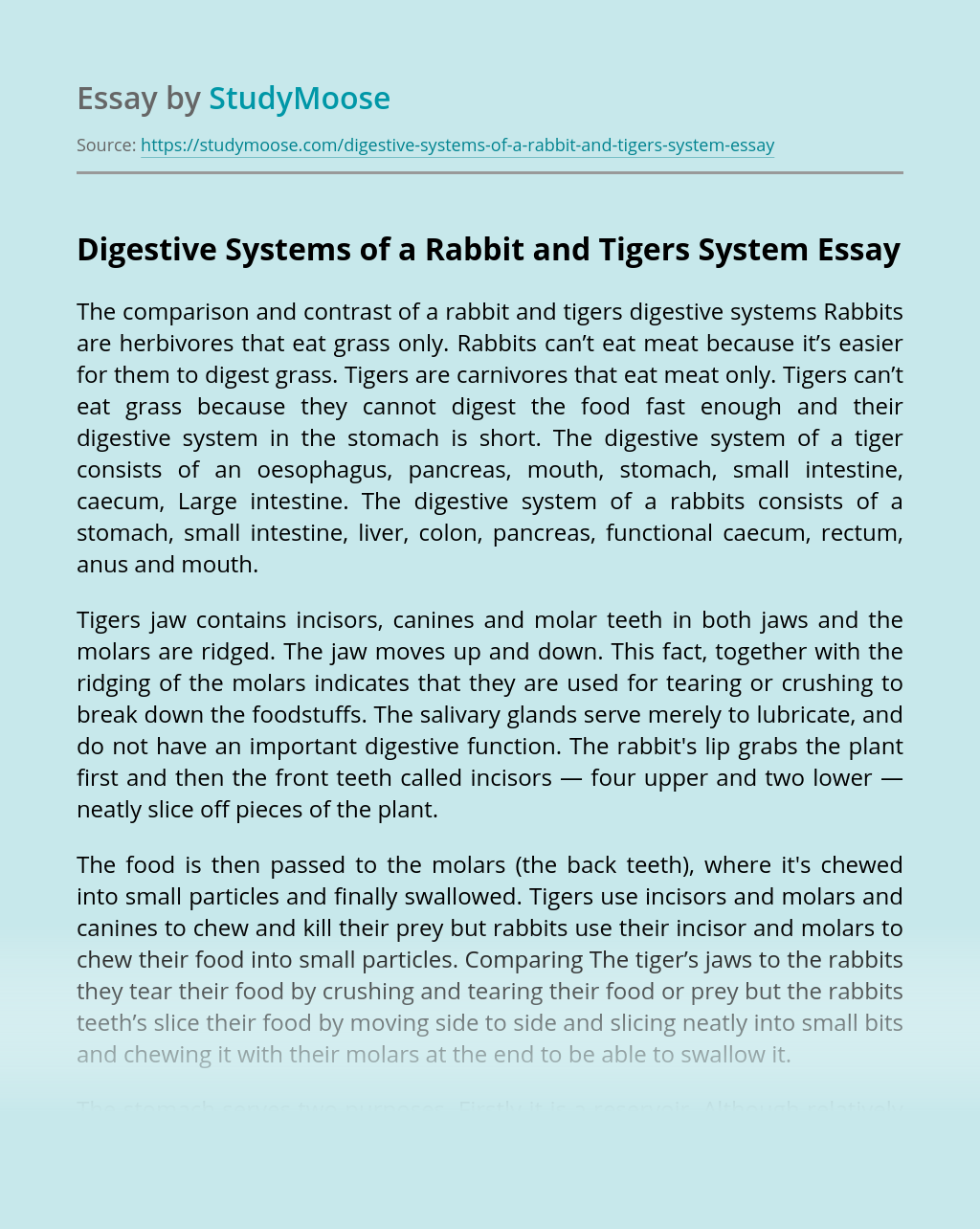 Digestive Systems of a Rabbit and Tigers System