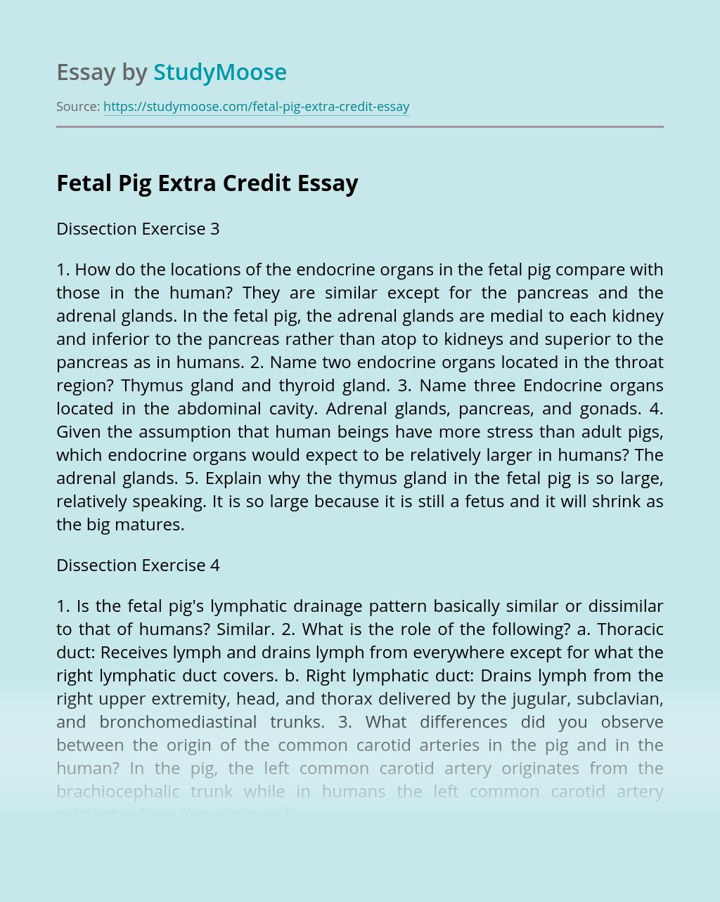 Fetal Pig Extra Credit