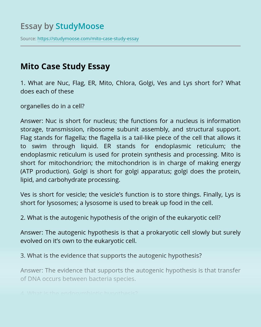 Mito Case Study