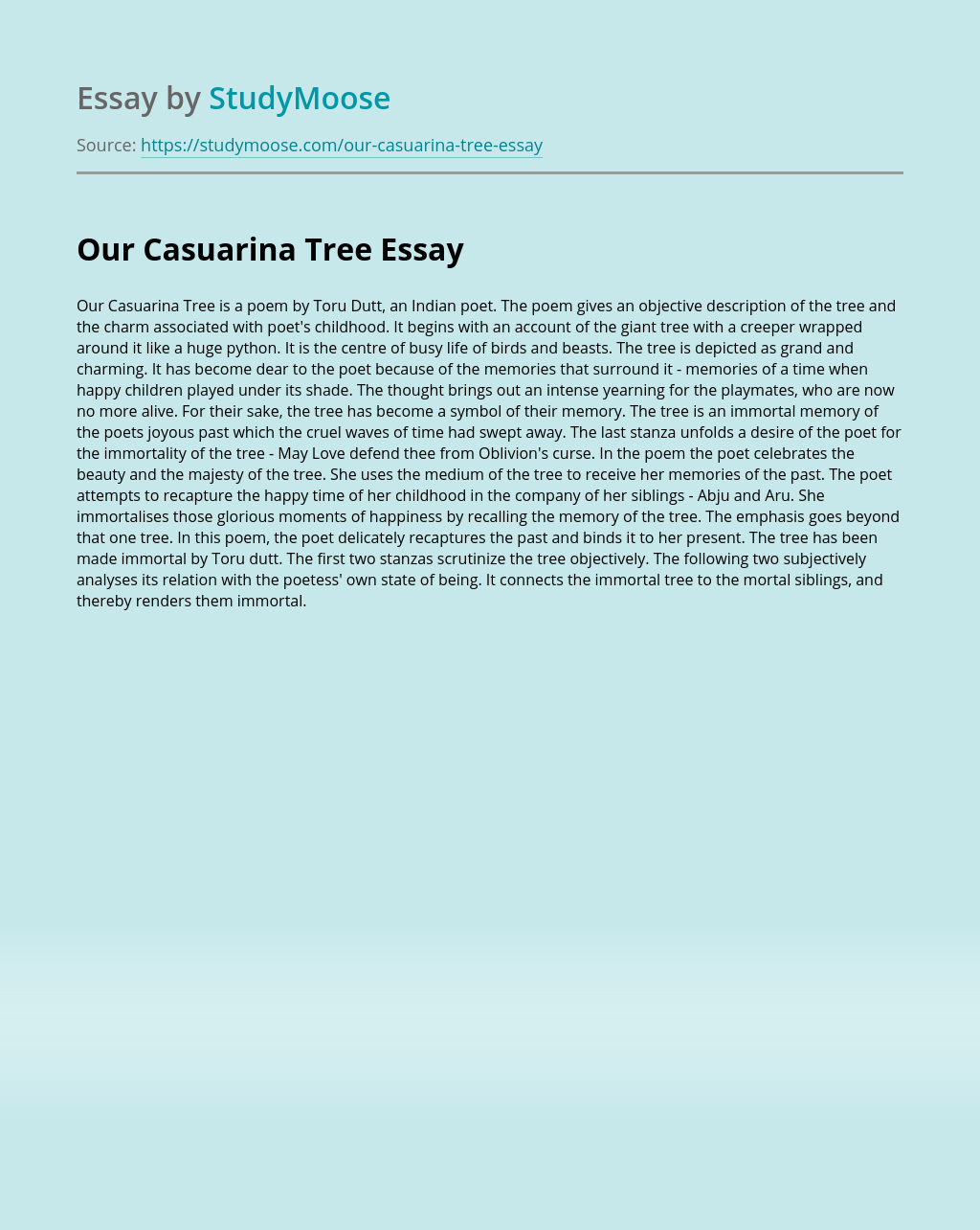 Our Casuarina Tree