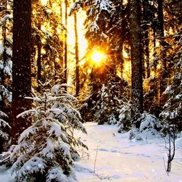 A Winter Morning Essay Examples