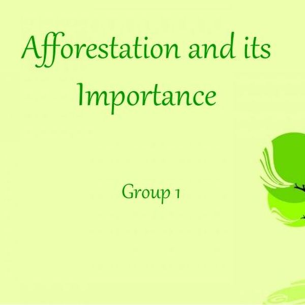 Afforestation And Its Importance Essay Examples