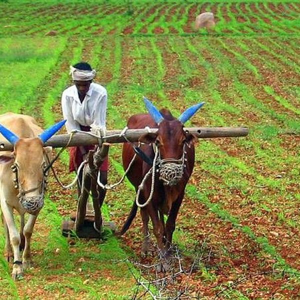 Agriculture In India Essay Examples