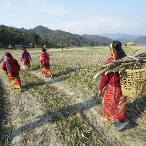 Agriculture In Nepal Essay Examples