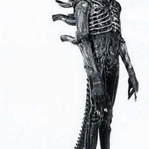 Alien Essay Examples