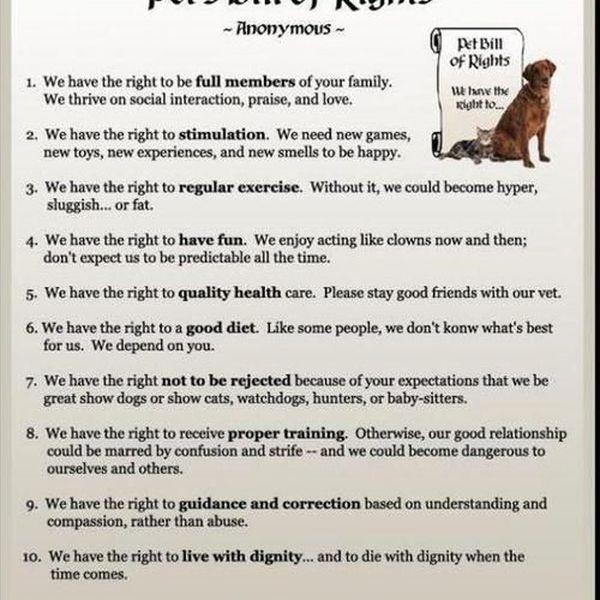 Animal Bill Of Rights Essay Examples