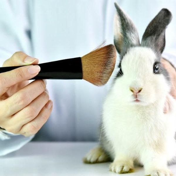 Animal Testing Essay Examples