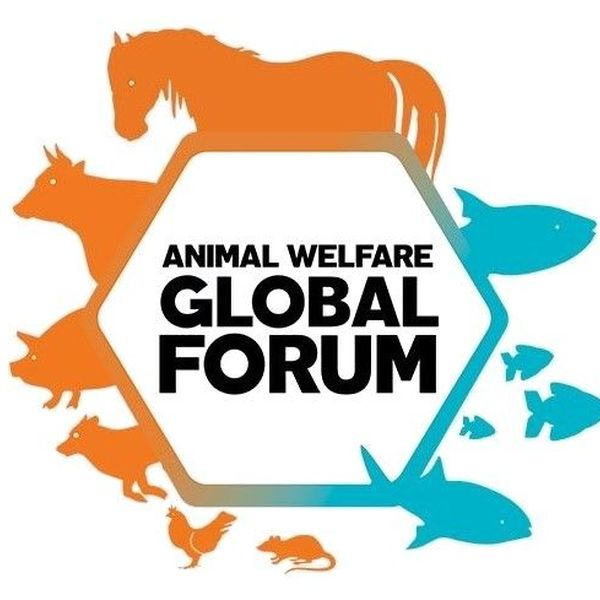 Animal Welfare Essay Examples