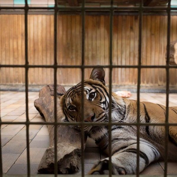 Animals Behind Bars Essay Examples