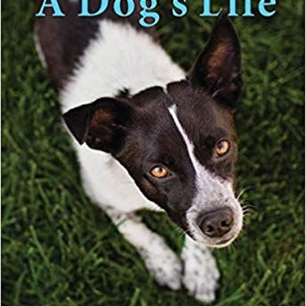 Autobiography Of A Dog Essay Examples