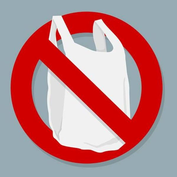 Banning Of Plastic Bags Essay Examples
