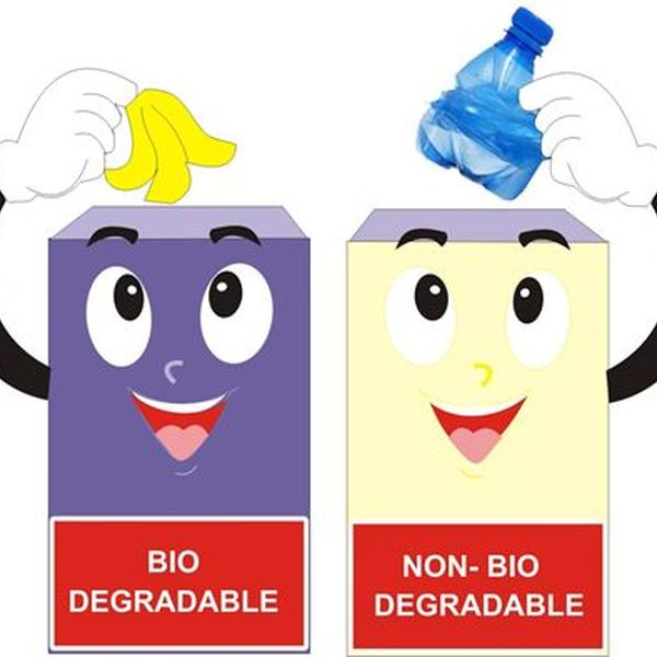 Biodegradable And Nonbiodegradable Waste Essay Examples