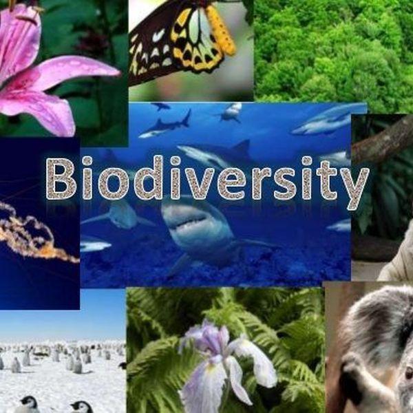 Biodiversity Essay Examples