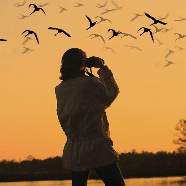 Bird Watching Essay Examples