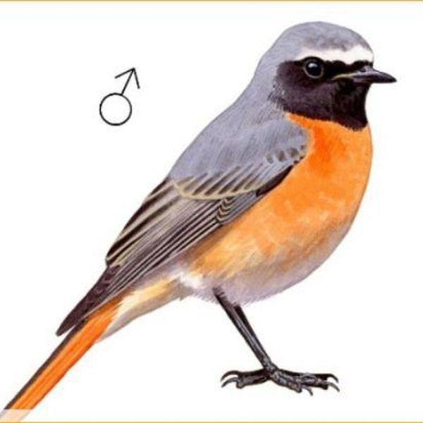 Bird Essay Examples