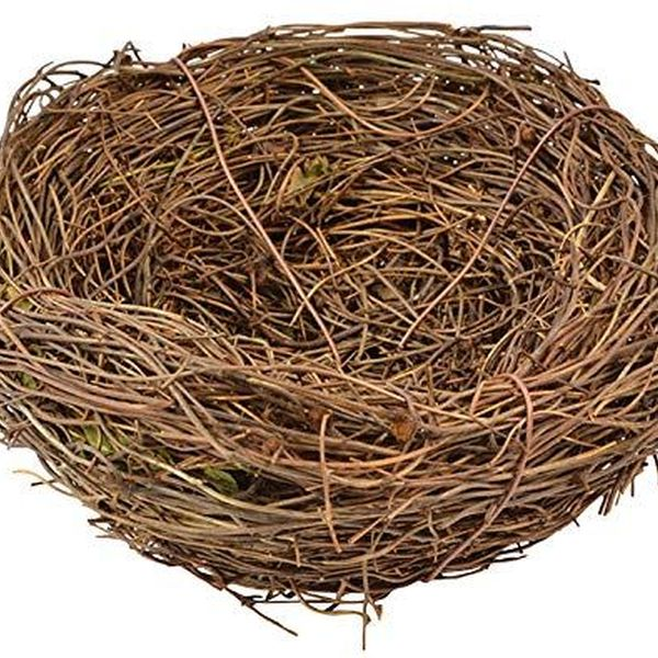 Birds Nest Essay Examples