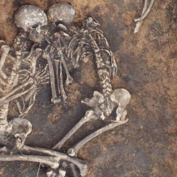 Bubonic Plague Essay Examples