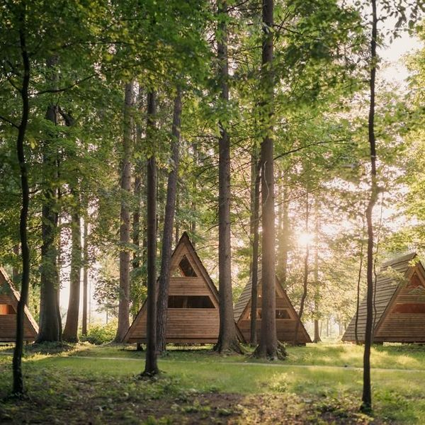 Camping In The Forest Essay Examples