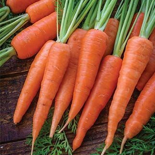 Carrot Essay Examples