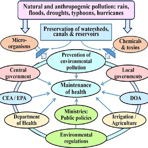 Causes Of Environmental Pollution Essay Examples