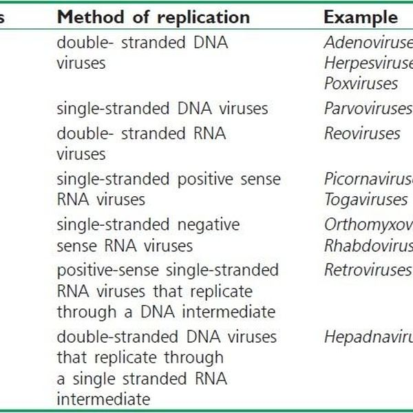 classification of virus Essay Examples