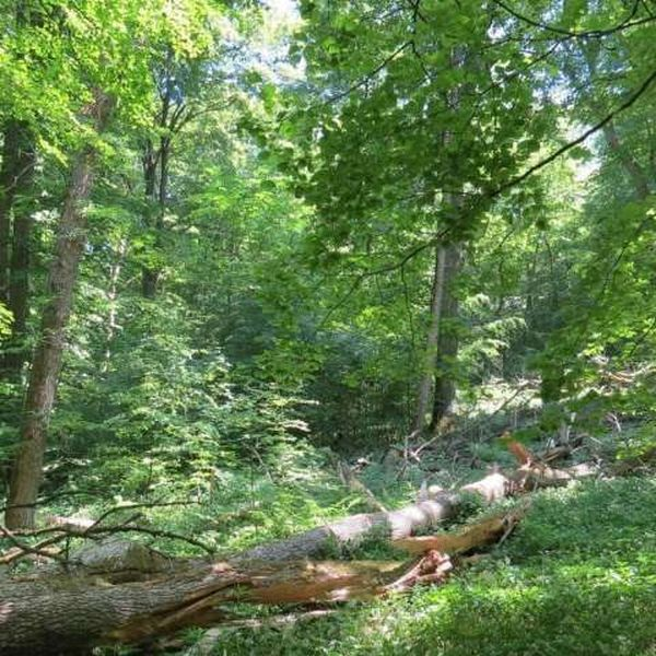Forest conservation essay