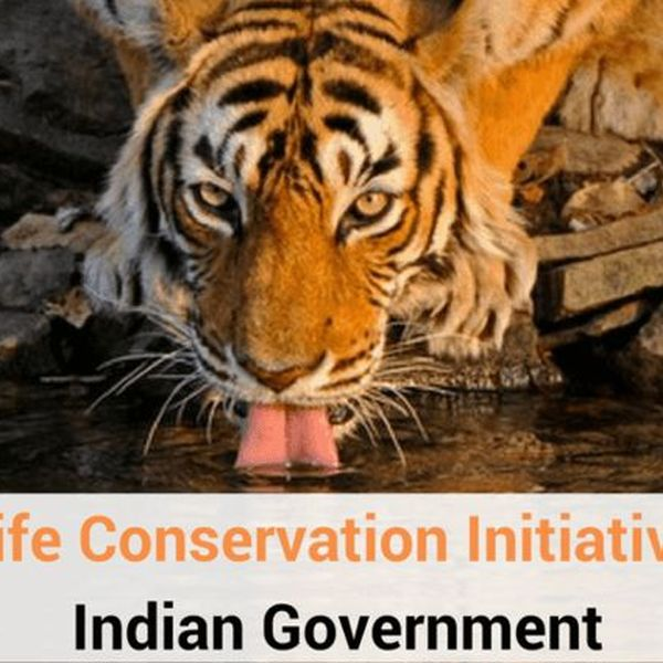 Conservation Of Wildlife In India Essay Examples