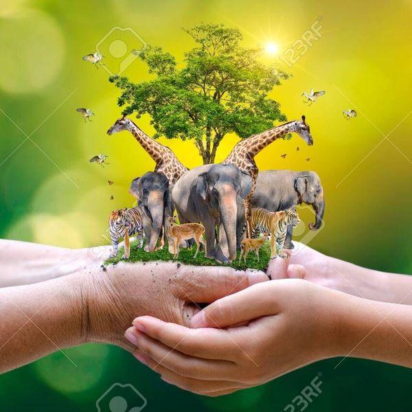 Conserve Wildlife Essay Examples