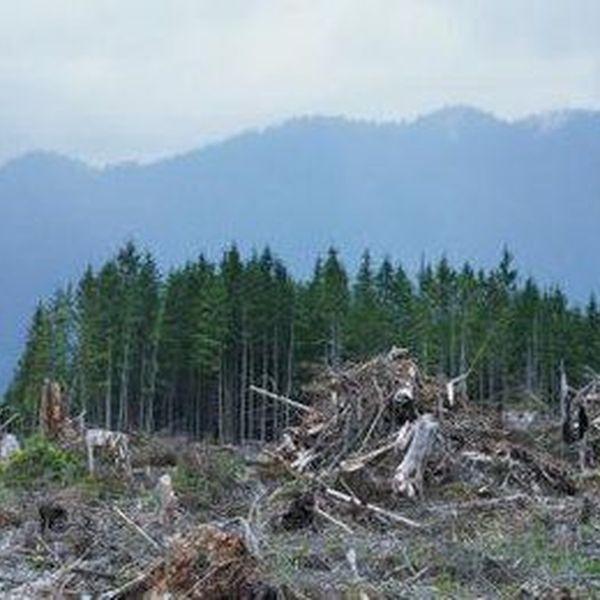 Dangers Of Deforestation Essay Examples