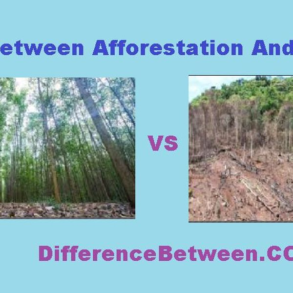 Deforestation And Afforestation Essay Examples
