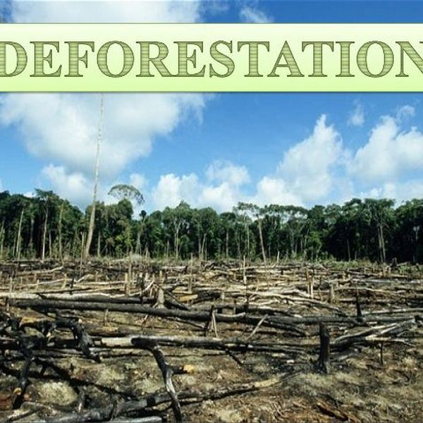 Deforestation And Its Effects Essay Examples