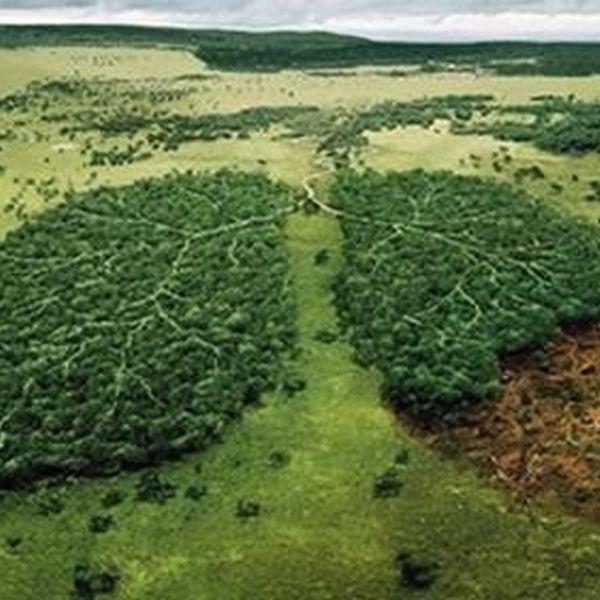 Deforestation Essay Examples