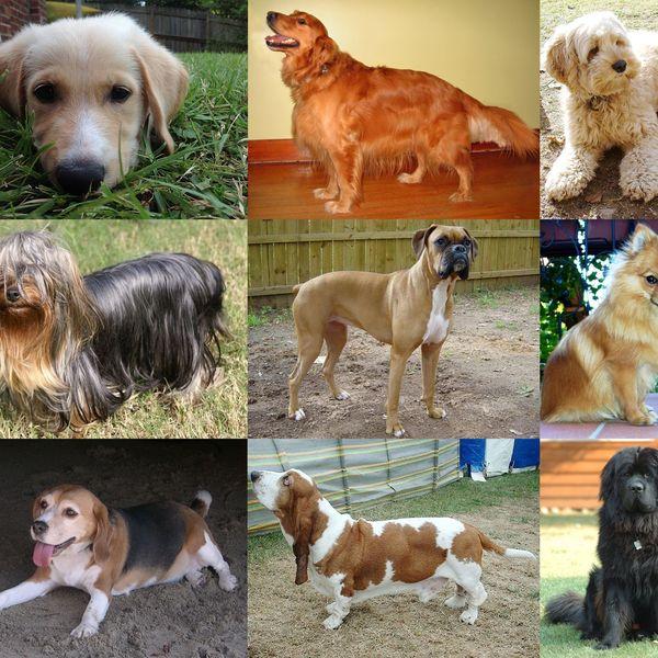 Dog Essay Examples