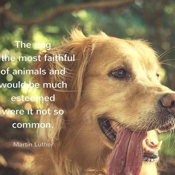 Dogs Are Most Faithful Animals Essay Examples