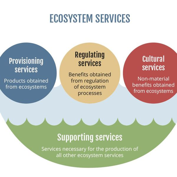 Ecosystem Services Essay Examples