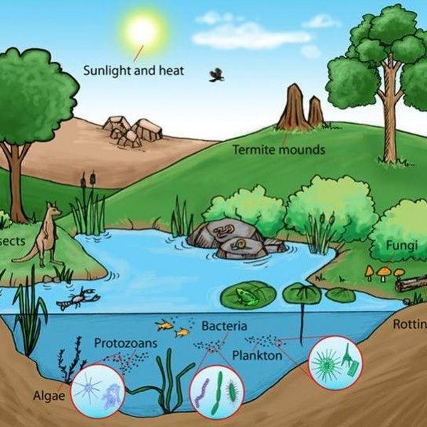 Ecosystem Essay Examples
