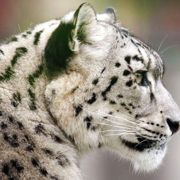 Endangered Species Of Animals Essay Examples