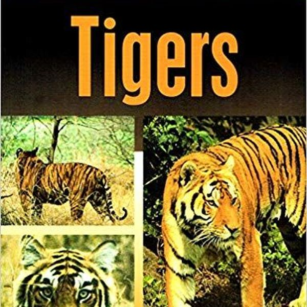Endangered Species Tiger Essay Examples